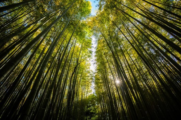 Japan_20160512_125
